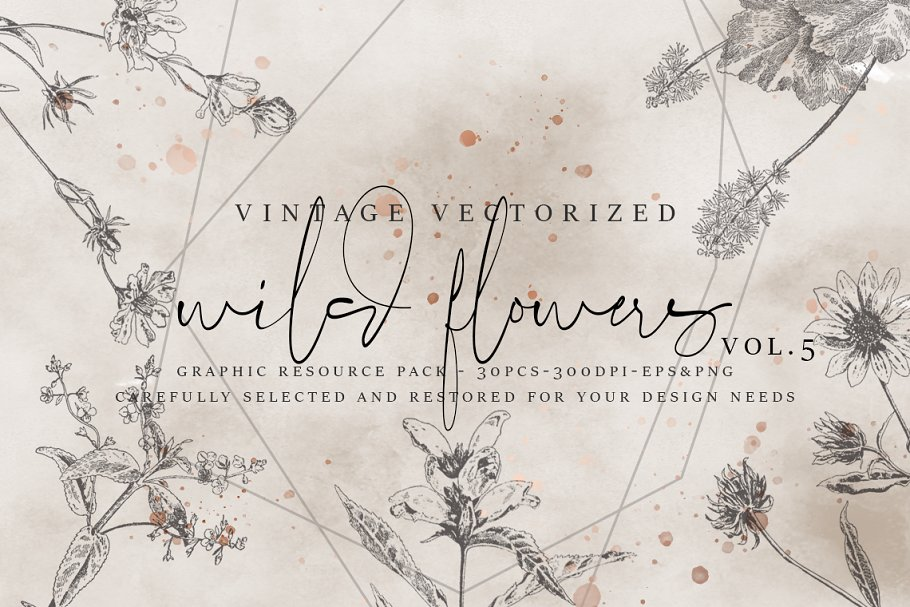 VintageVectorized-Wildflower Clipart