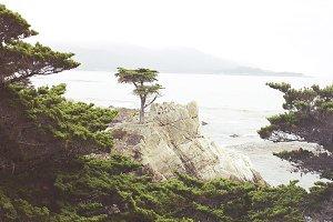 The Lone Cypress I