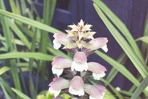 Bell Flower Stalk