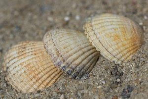 3 sea shells