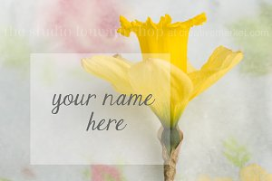 Styled Stock Photo - Daffodil Duo