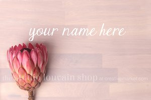 Styled Stock Photo - Protea Duo
