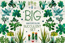 Watercolor succulent collection