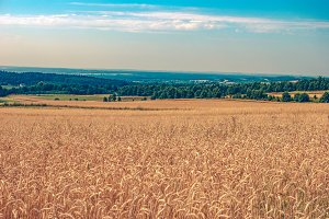 Fields of grain 2