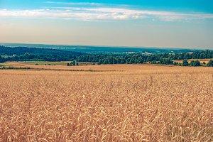 Fields of grain 2