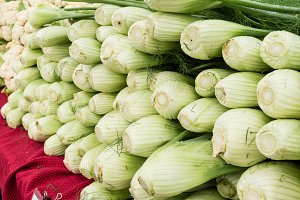 Fresh fennel bulbs at the market