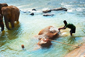 Elephant bathing, Sri Lanka