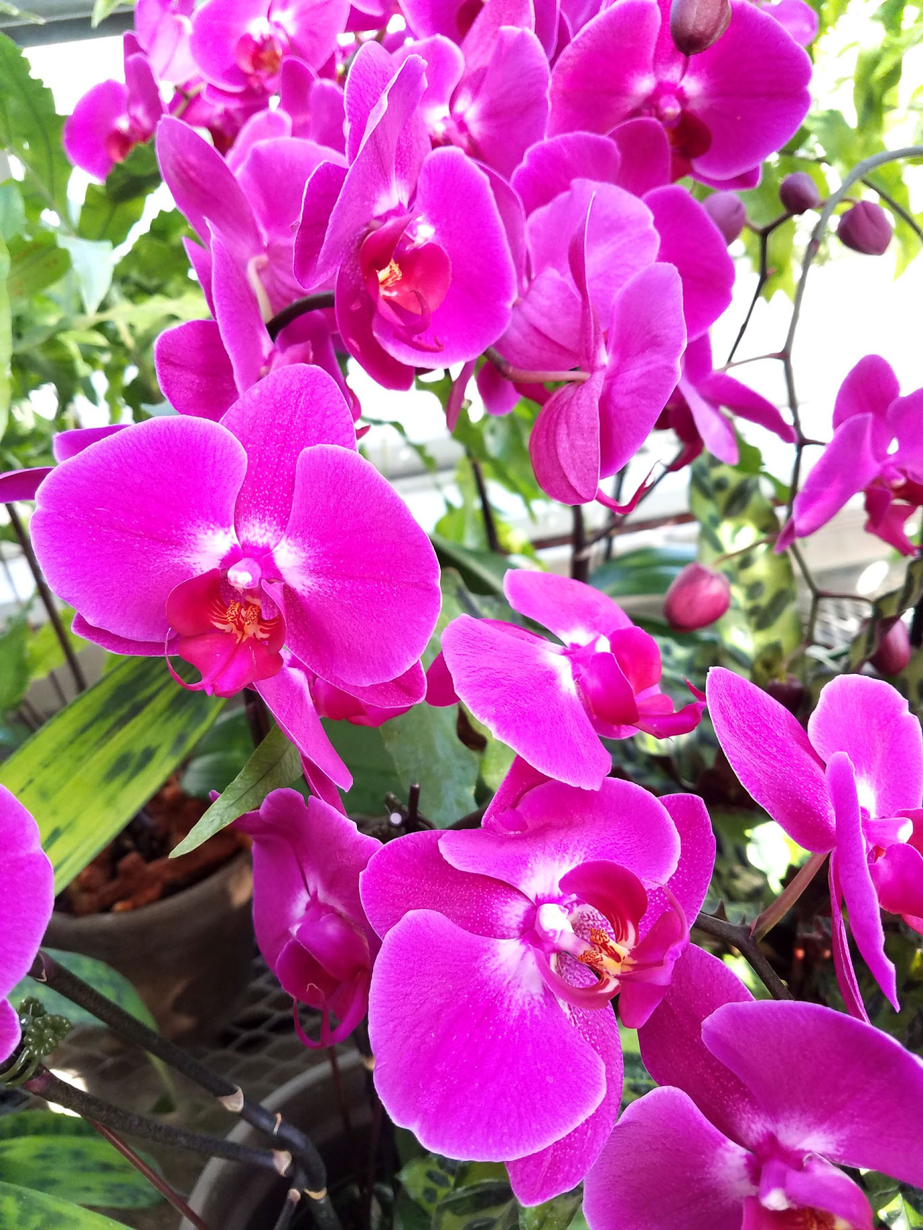 Orchid Bloom Waterfall High Quality Nature Stock Photos