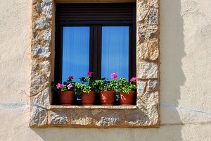 Window and geraniums