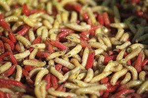 worms. Gusanos.