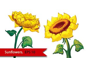Two Sunflowers. Vector