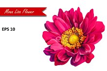 Pink Mona Lisa Flower. Vector