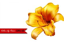 Yellow Lily Flower. Vector. EPS 10
