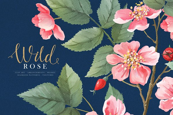 Watercolor Wild Rose