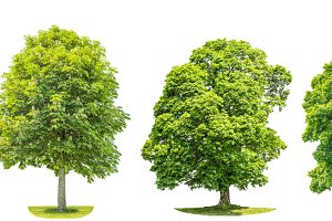 Collection of green trees JPG