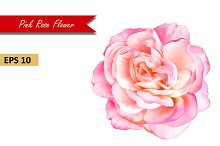 Beautiful Pink Rose. Vector