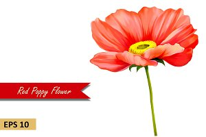 Red Poppy Flower. Vector