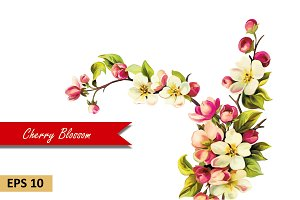 Cherry blossom flowers. Vector