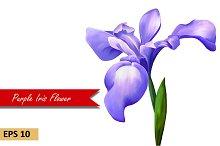 Purple Iris Flower. Vector