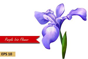Purple Iris Flower. Vector