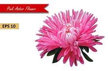 Pink Aster Flower. Vector