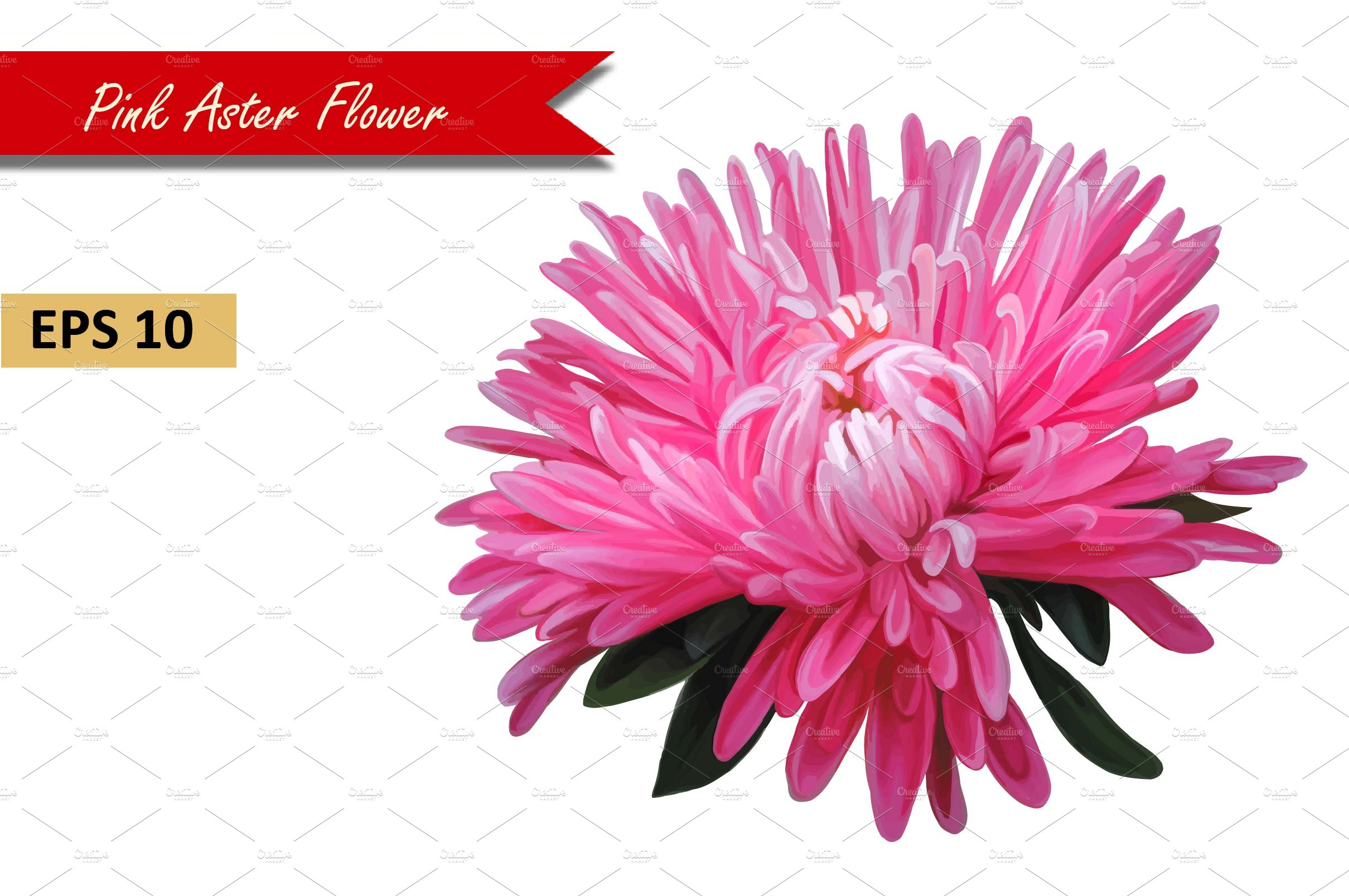 Pink aster flower vector graphic objects creative market mightylinksfo