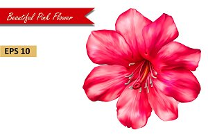 Beautiful Pink Flower. Vector