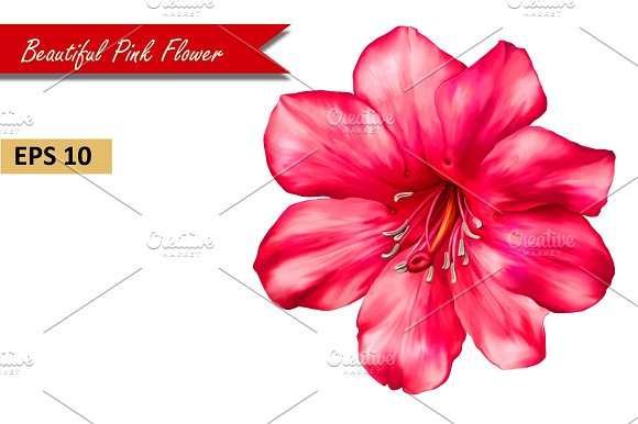 Beautiful Pink Flower. Vector in Objects