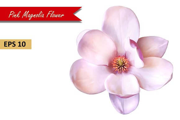 Pink Magnolia Flower. Vector - Objects