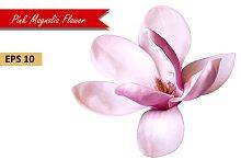 Pink Magnolia Flower. Vector