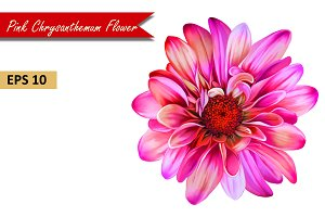 Pink Chrysanthemum Flower. Vector