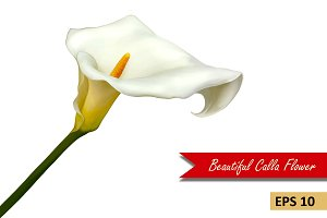 White Calla Lily Flower. Vector