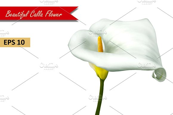 white calla lily flower vector graphic objects creative market