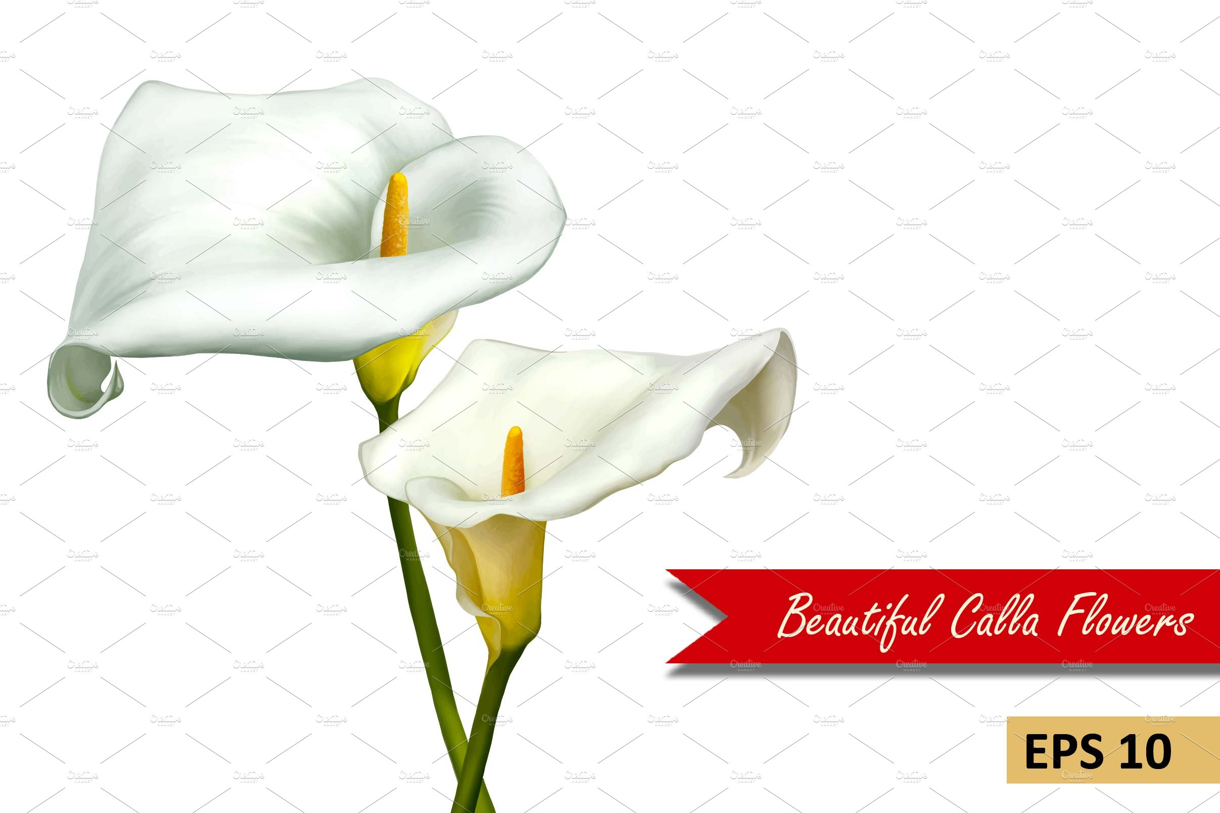 White Calla Lily Flowers Vector Graphic Objects Creative Market