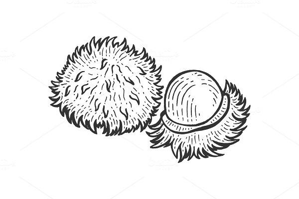 Rambutan sketch engraving vector