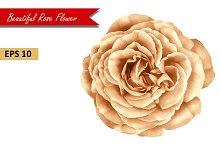 Beautiful Rose Flower. Vector