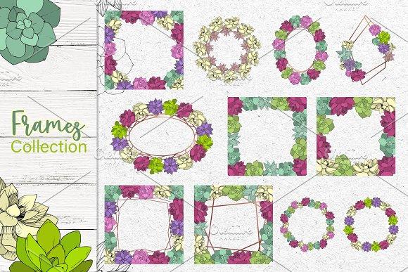 Succulents Vector Set