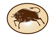 Texas Longhorn Bull attacking