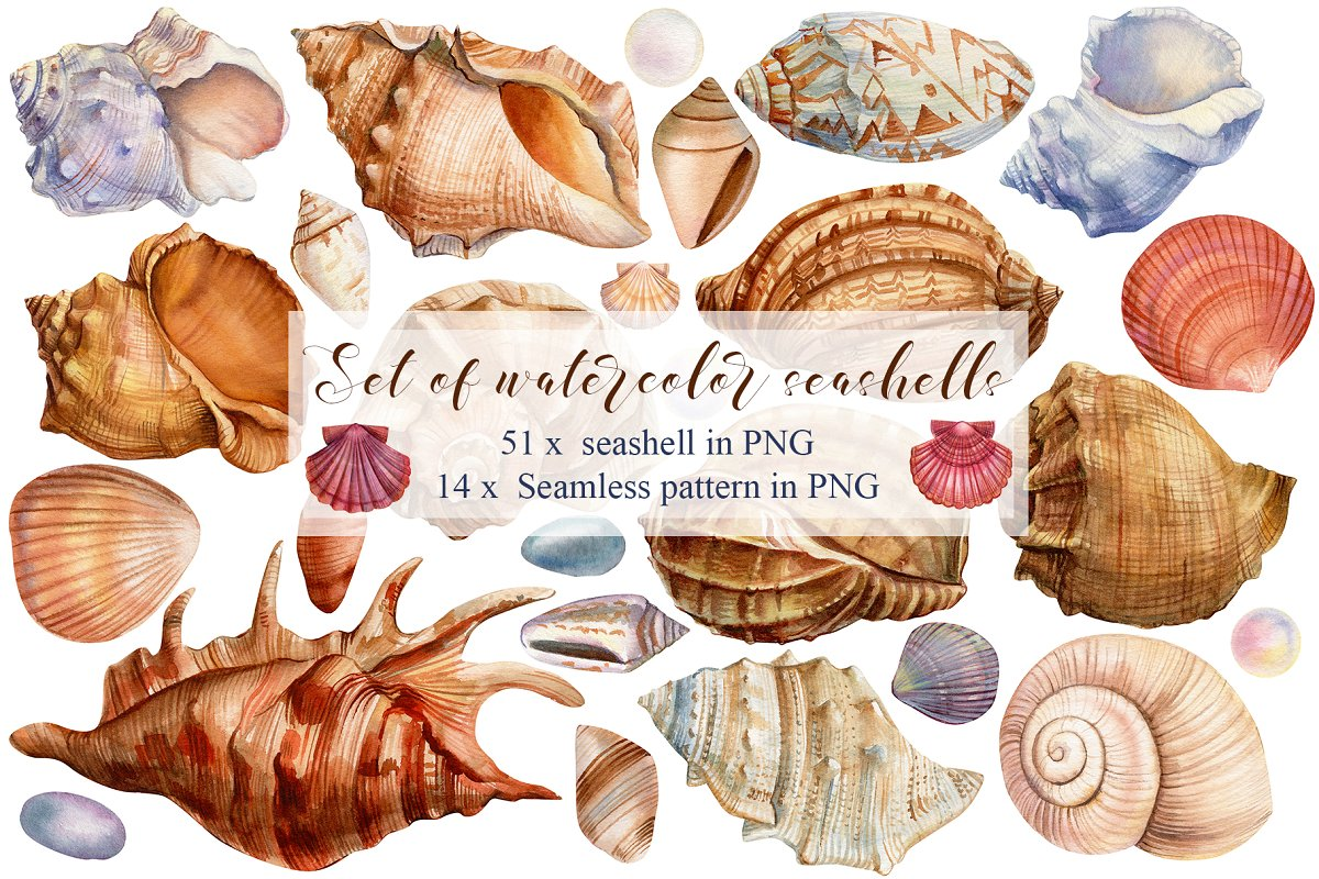 Set of seashells watercolor in Illustrations - product preview 8