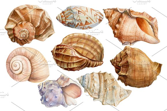Set of seashells watercolor in Illustrations - product preview 1