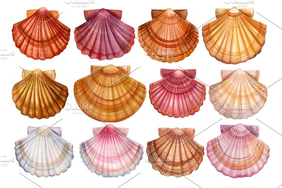 Set of seashells watercolor in Illustrations - product preview 2