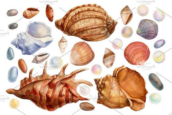Set of seashells watercolor in Illustrations - product preview 3