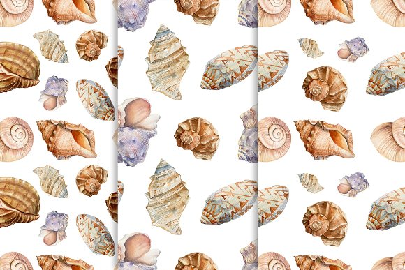 Set of seashells watercolor in Illustrations - product preview 6