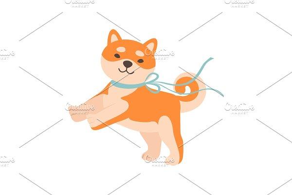 Shiba Inu Dog with Leash, Cute