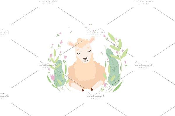 Adorable Little Lamb, Cute Sheep