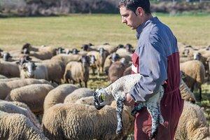 A farmer grabs a lamb in arms (2)