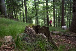 Woman and a dog blurred in forest