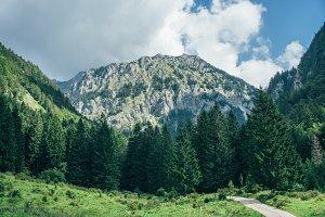 Green meadows on the high mountain