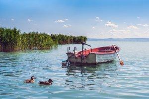 Boat and wild ducks on lake Balaton