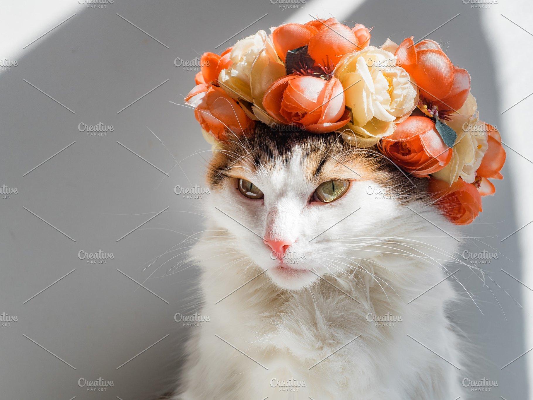 Beautiful Calico Cat with a wreath o